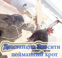 unichtojenie_krotov_2