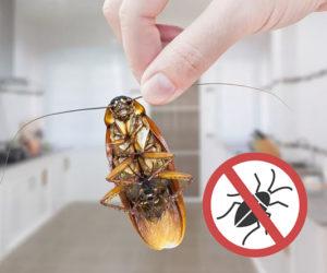 _Уничтожение_насекомых